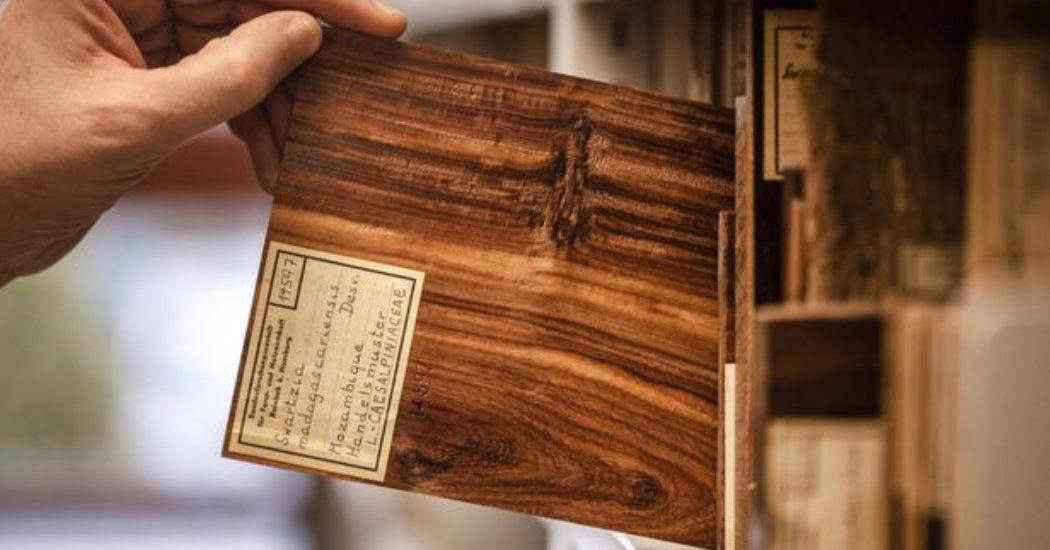 Holz-Archiv, Thünen-Institut